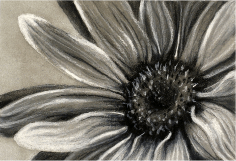 drawing - flower