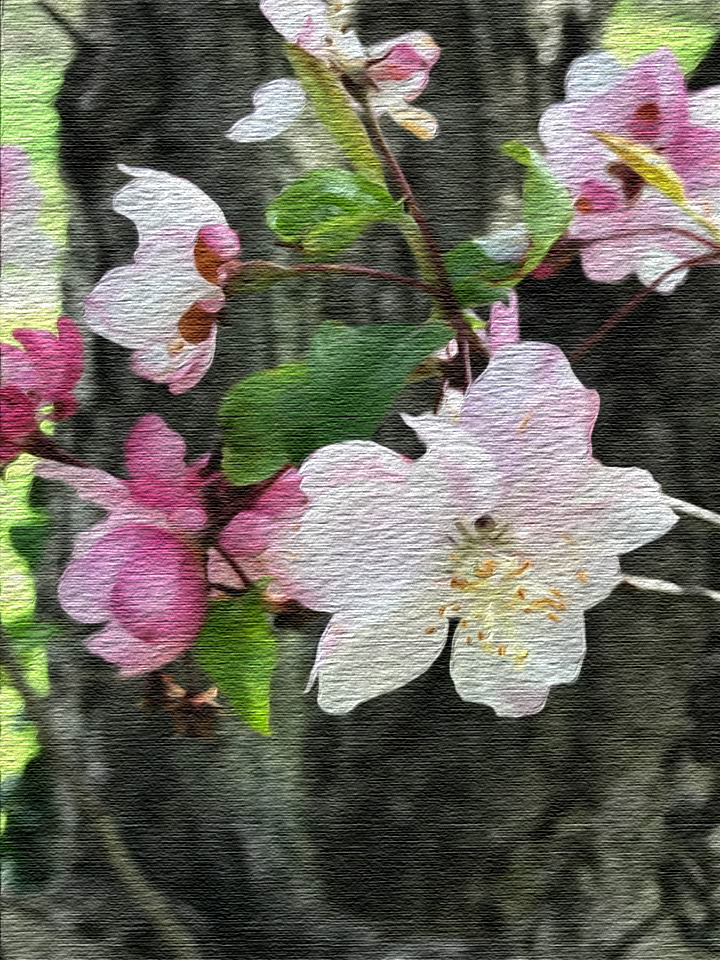 spring blossoms - photoshop.jpg